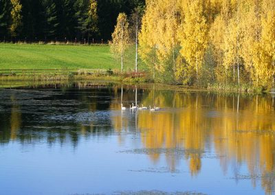 Finnish_nature_Elamyslaari_pond_birds